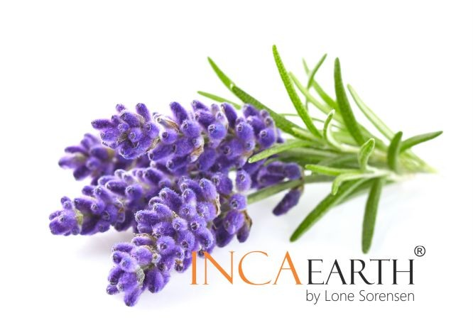 The health potential of Lavender Essential Oil
